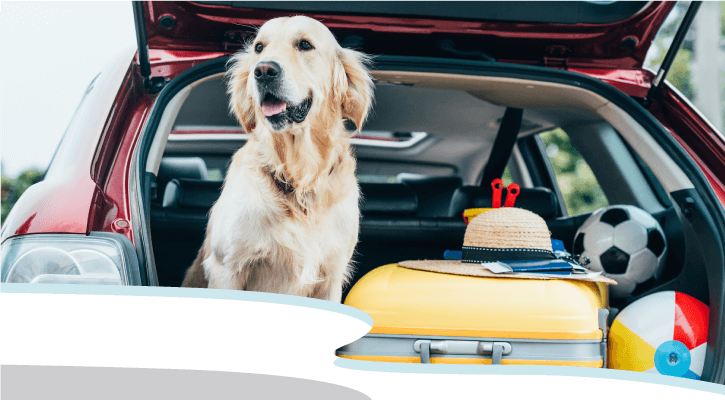 Hitting the Road with Your Best Bud? We Can Help!